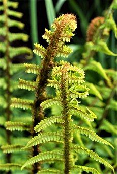 Flora, Leaf, Nature, Fern, Desktop, Growth, Frond
