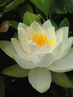 Flower, Flora, Garden, Leaf, Nature, Blooming, Summer
