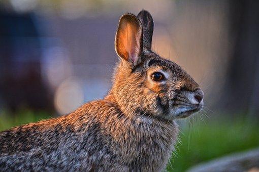 Wildlife, Nature, Animal, Mammal, Outdoors, Fur, Wild