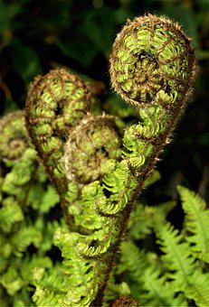 Fern, Flora, Nature, Leaf, Tree, Botanical