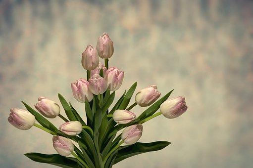 Tulip, Flower, Nature, Plant, Floral, Leaf, Background