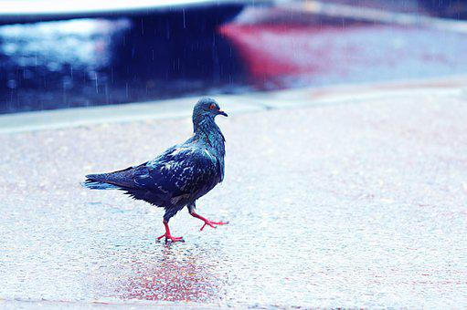 Nature, Bird, Outdoors, Winter, Wing, Feather, Pigeon
