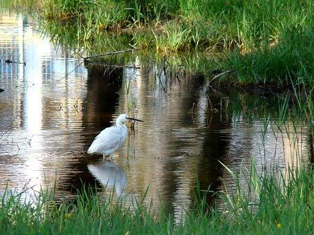 Water, Nature, Lake, Reflection, Pool
