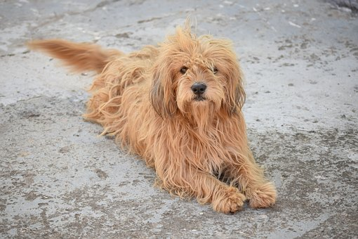 Dog, Animal, Cute, Pet, Portrait, Mammals, Nature