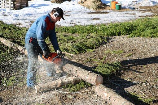 Nature, Logger, Chainsaw, Firewood, Log, Six