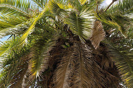 Palm, Tree, Nature, Tropical, Summer, Plant, Exotic