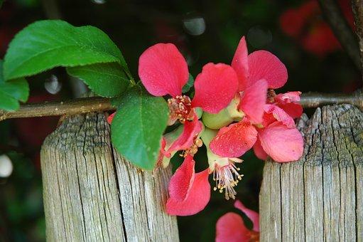 Nature, Flower, Tree, Leaf, Plant, Garden, Season