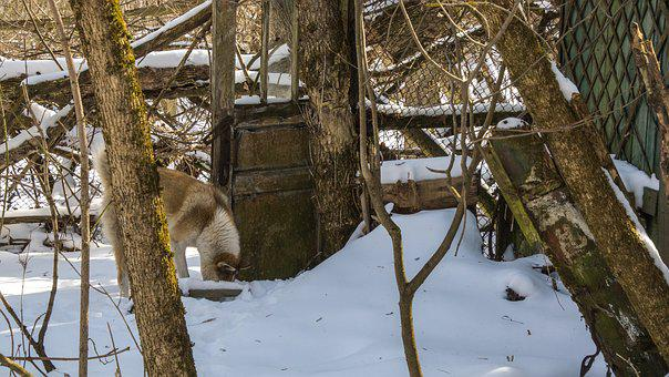 Dog, Forage, Snow, Exclusion Zone, Winter, Village