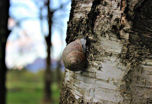Snail, Nature, Animal, Green, Plant, Mucus, Slimy