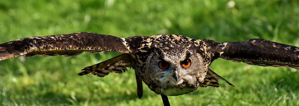 Owl, Bird, Feather, Eagle Owl, Animals, Wild Bird, Cute