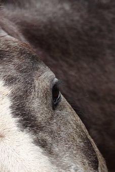 Animal Kingdom, Mammals, Portrait, Art, Artistic Horse