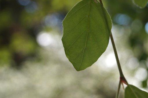 Leaf, Plant, Tree, Nature, Growth, Close, Fresh, Bright