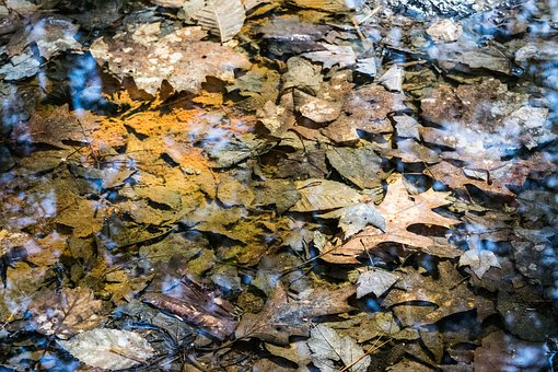 Nature, Fall, River, Water, Leaf, Outdoors, Pattern