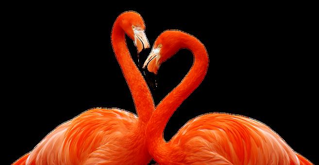 Flamingo, Bird, Love, Heart, Wildlife, Animal, Feather