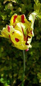 Flower, Nature, Flora, Leaf, Color