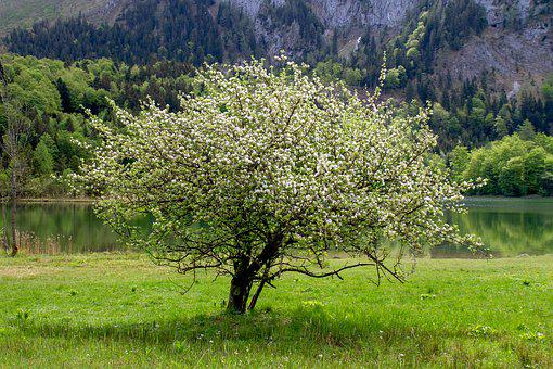 Tree, Flowers, Landscape, Nature, Grass, Meadow, Lake