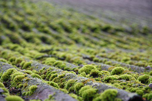Moss, Roof, Nature, Mossy, Landscape, Bryophytes, Macro