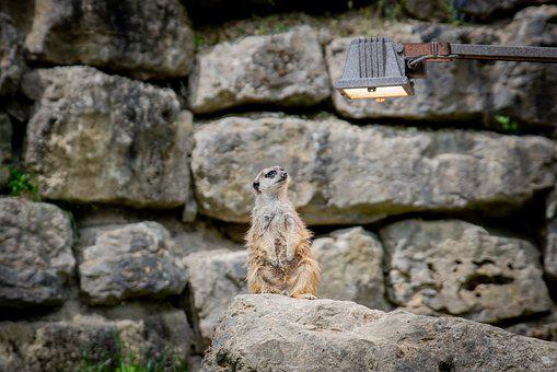 Stone, Rock, Nature, Wall, Old, Zoo, Animal