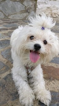 Animalia, Canis, Familiaris, Mammalia, Nice, Pet