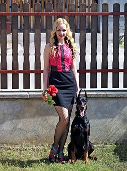 Doberman, Blonde Woman, Red Rose, Pretty, They Are Nice
