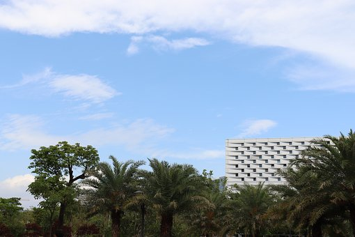 Sky, Tree, Nature, Summer, South Hkust