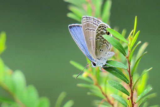 Butterfly, Nature, Insect, Outdoor, Summer