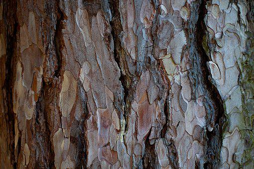 Bark, Tree, Wood, Pattern, Background, Texture