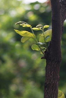 Nature, Wood, Leaf, Plants, Outdoors, Spring, Vivid