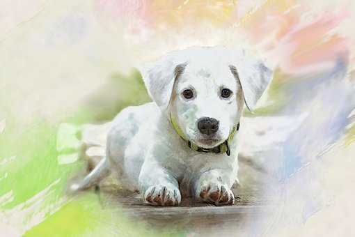 Watercolor, Puppy, Doggy, Charming, Animals, Dog House