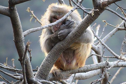 Wildlife, Nature, Tree, Animal, Monkey, Outdoors