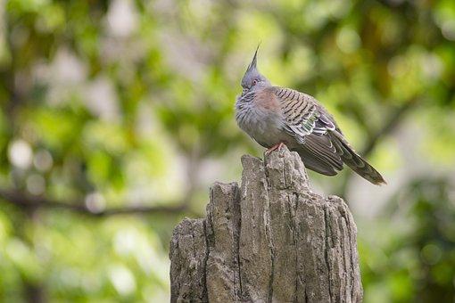 Bird, Nature, Wildlife, Animal, Feather, Wild, Outdoor