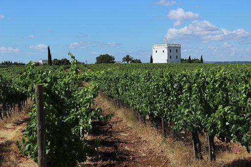 Vineyard, Creepers, Agriculture, Winery, Farm, Wine