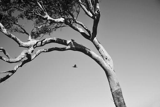 Nature, Tree, Branch, Wood, Season, Winter, Clear