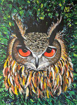 Owl, Bird, Nature, Feather, Animal, Animal World