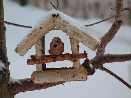 Cherry Cutter, Outdoors, Nature, Bird, Animal