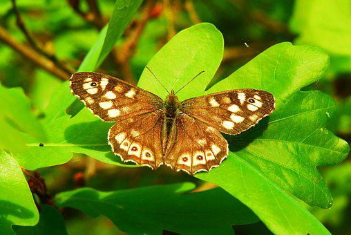 Butterfly Day, Nature, Insect, At The Court Of, Animals