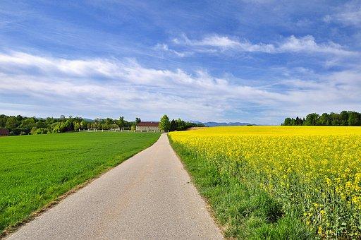 Nature, Landscape, Blooming Rape Field, Farmhouse