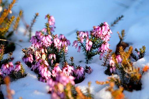 Plant, Garden, Close, Macro, Winter, Macro Photography