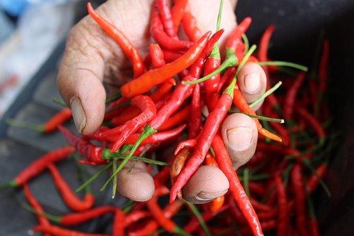 Farmland, Chilli, Rai, Food, Savory, Nature