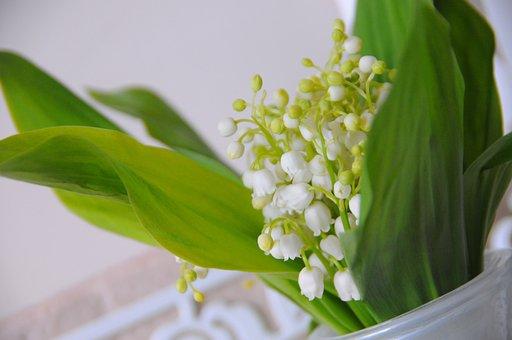 Plant, Sheet, Nature, Flower, Husk, Freshness, Herbal