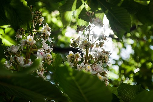 Nature, Plant, Sheet, Tree, Outdoors, Summer, Flower