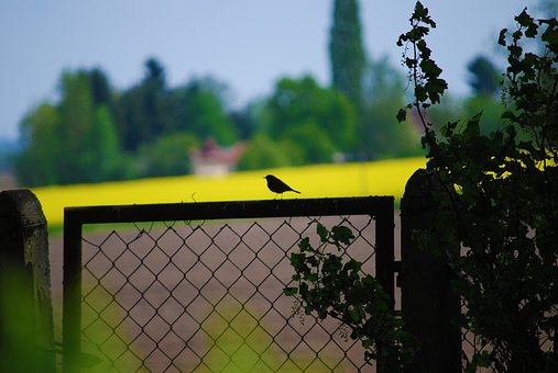 Tree, Fence, Plant, Garden, Nature, Summer, Landscape