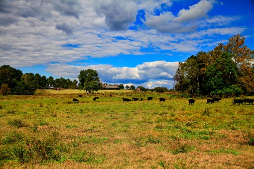 Nature, Scenery, Grass, Wood, Panorama Of, Hayfields