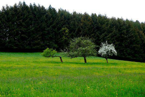 Landscape, Grass, Meadow, Nature, Forest, Trees
