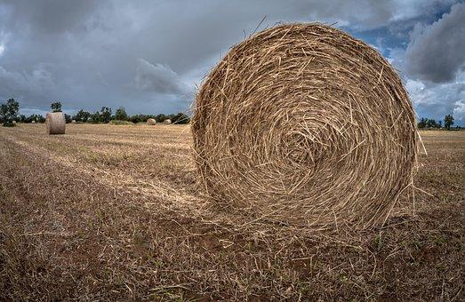 Hay, Straw, Farm, Rick, Pastures, Rural Area, Field