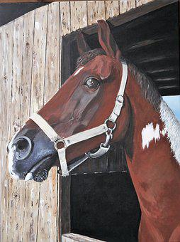 Horse, Painted, Acrylic Paints, Head, Animal, Livestock