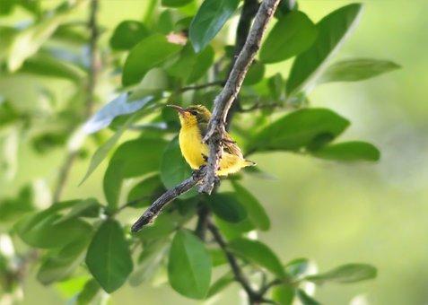 Nature, Bird, Tree, Leaf, Outdoors, Little, Wildlife