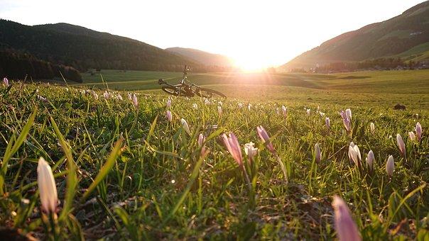 Nature, Grass, Flower, Meadow, Landscape, Plant, Field