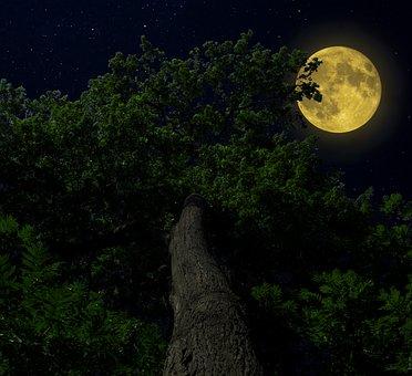 Nature, Forest, Tree Moon, Sky, Light, Night, Moonlight