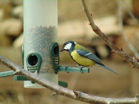 Coal Tit, Bird Feeder, Bird, Animal, Nature